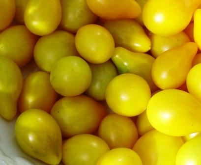 Delicous pear shaped, yellow, cherry tomatoes